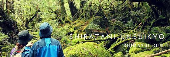 もののけ姫の森から太鼓岩まで。12月の屋久島では静かな森が楽しめます。