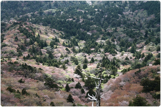 屋久島,白谷雲水峡,太鼓岩,もののけの森,ガイド,ツアー,もののけ姫,苔