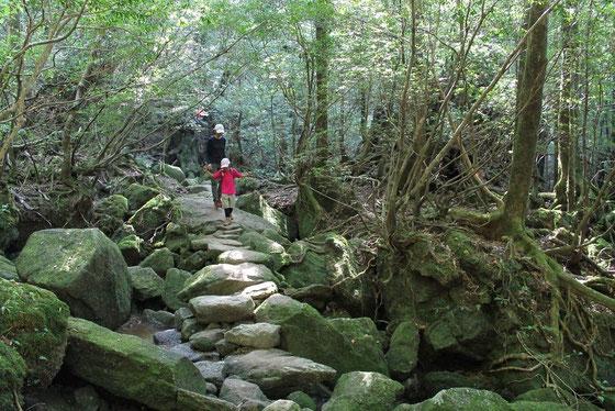 屋久島,親子,トレッキング,白谷雲水峡,もののけの森,太鼓岩,ヤクスギランド