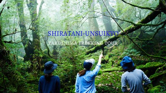 白谷雲水峡,もののけの森,太鼓岩,苔むす森,屋久島2月,屋久島旅行,屋久島観光