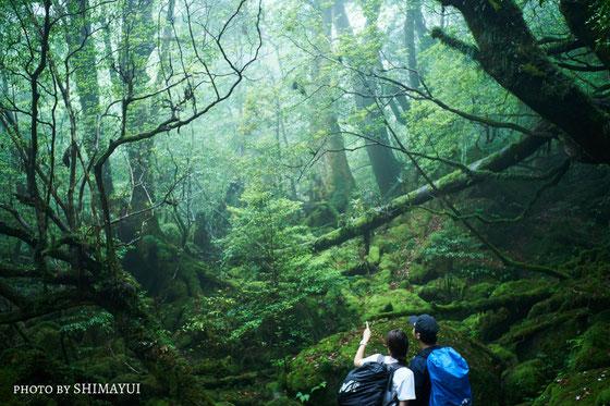 屋久島,半日ツアー,白谷雲水峡,苔むす森,ガイドツアー,カヤック,カヌー,もののけの森,屋久島3泊4日,屋久島2泊3日