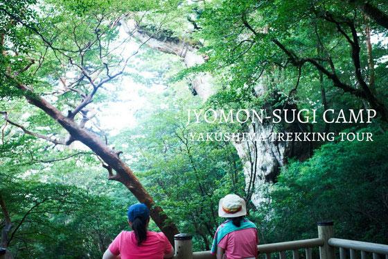 屋久島ガイドがご案内する、縄文杉1泊2日ガイドツアー。屋久島の森でキャンプする。