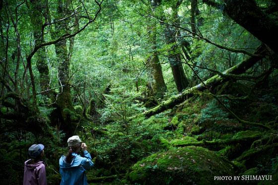 白谷雲水峡・苔むす森(もののけ姫の森)