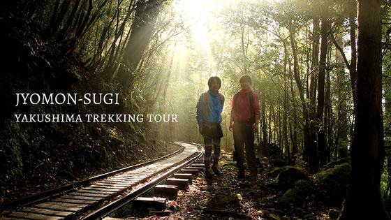 樹齢7,200年の縄文杉へ。往復22kmの冒険トレッキング。,屋久島6月