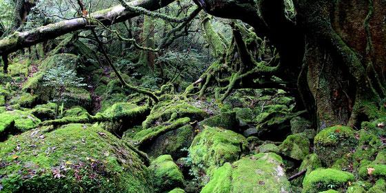 映画でも有名な白谷雲水峡「もののけ姫の森」。