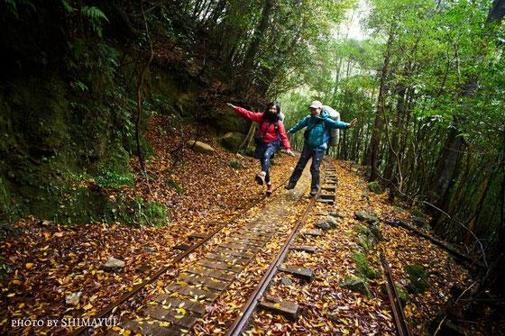 常緑樹の多い屋久島にも、10月後半から11月前半に、紅葉の季節が訪れる。