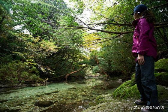 紅葉のはじまる淀川の風景。,宮之浦岳日帰りツアー,屋久島,清流