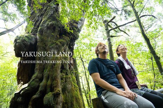 ヤクスギラントツアー~屋久杉と渓谷と苔ワールドへ~