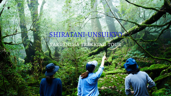 白谷雲水峡,もののけの森,太鼓岩,苔むす森,屋久島4月,屋久島観光,屋久島旅行,卒業旅行