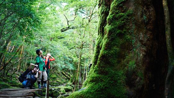 もののけ姫の森コース・癒しの渓谷美(白谷雲水峡ガイドツアー)