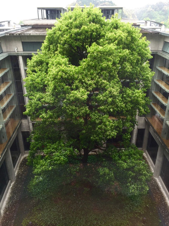 病院にお見舞いに行ってたんですけどね、、この病院中庭に大きな木が植えられてます。 モダンで無機質な建物に有機物の植物の組み合わせが超カッコよくて♡ 昨日は風が強かったんですけど樹が風邪で揺れる様子、、微動だに動かない建物、、ず~っと観てられることができましたw 待合からのショットですけど広角レンズだったらもっとこのカッコよさが伝わるんだけどねwww