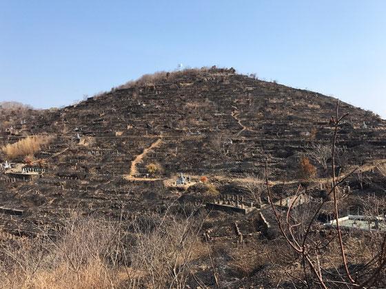 モーニングした後、別行動で山へ、。 一ヵ月程前にここで山火事があったんですよね~、、で登ってたDさんから現場後の写真を貰ってたんですけど、それがコレ! 写真だとどうしてもスケール感が出なくてショボい感じになるんですけど実際は凄いんです!