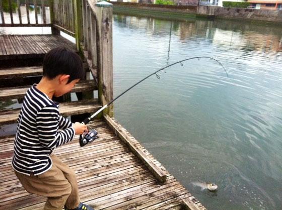 6時前に起きて江ノ口川に釣りに行って来た。 ファーストヒットはボラw まぁ~この川は鯉かボラぐらいしか釣れないしね、。  息子さん、ギャーギャー騒いでウオーキング中の人も寄って来るしw