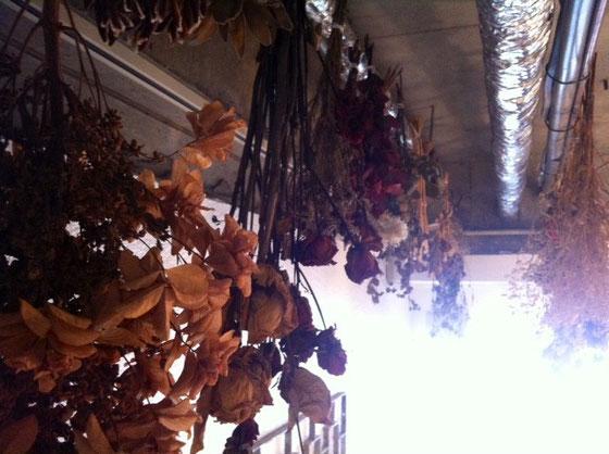 これはお店の天井、、 ここのも少しづつですが増えていってます♪ 生花と違いこんな楽しみ方もできたるするDF♪ 皆さんもどう?