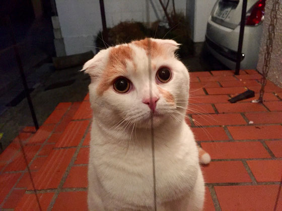 なんか違和感あると思いませんか? この猫、耳が垂れてるんですよね!www また遊びに来てほしいわ~♡