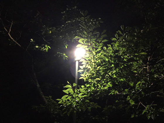 あと、隣の公園の外灯がLEDにチェンジされてた!、、、これって大したことないとおもうでしょ~? でも僕には大ありで、外灯からの木陰がいい感じなんですよ♡