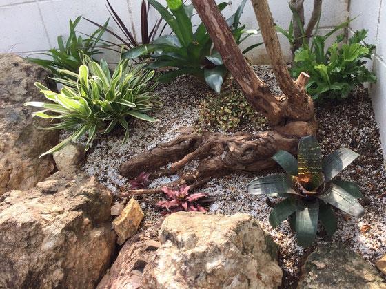 ロックガーデンの完成!(途中の写真は撮ってません!集中しちゃうもんでw) まあ排水性の良い土に入れ替えたくらいですけど、、で土の交換をしていたら、良い感じでバラの根が出てきたから見せる事にした♪