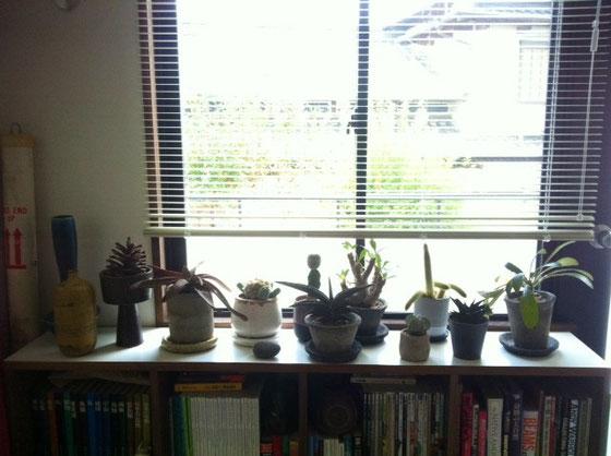てか植物流行り過ぎで冷めそうやけど、「俺、昔から育ててっから!」って自分に言い聞かせて冷めないようにしていますW この部屋は、一軍&日光が凄く必要なヤツ、。