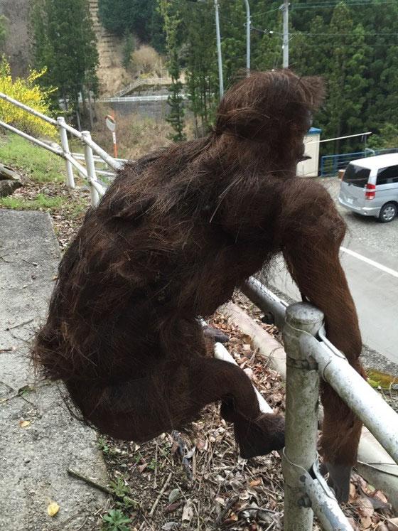 こわ~!www すげ~生命感でちゃってますけど!w この辺り猿も多いけど、骨格は完全にゴリラやチンパン的、、全体がシュロで覆われてると思います。 でこれが顔です、、、