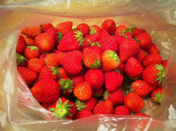 タイトルの苺苺苺、、、、って打ってたら、苺って漢字が本物の「苺」に見えてきた!俺だけ!? 、、、、。すいません、本題に入ります。 大量の苺を頂いた♪ ジャムにしようと思います。 森部さんありがとね~♪