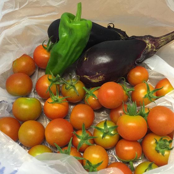 職場菜園で採れた野菜を頂いた! プロっぽさが無いところが逆にいいですね~♪w 安心安全! 山形さんありがとうございました。