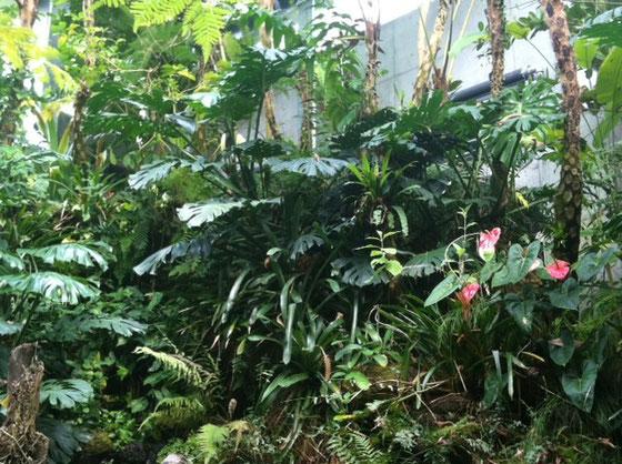 目の保養にはなるけど、自宅のと比較してしまってwww まあ実際、これだけ植物を大きく元気にと思えば高温多湿になるし、人が生活するにわね~、、、と、思い込みましょ~w それにしても蒸し暑い!  温室出て冷たい物でも。。。