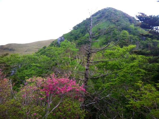 3時間半程、登ったら出てきた小ピークの地蔵頭、、ここから急斜面のロープ場が続きます、、今回も写真撮る余裕なく、、、w