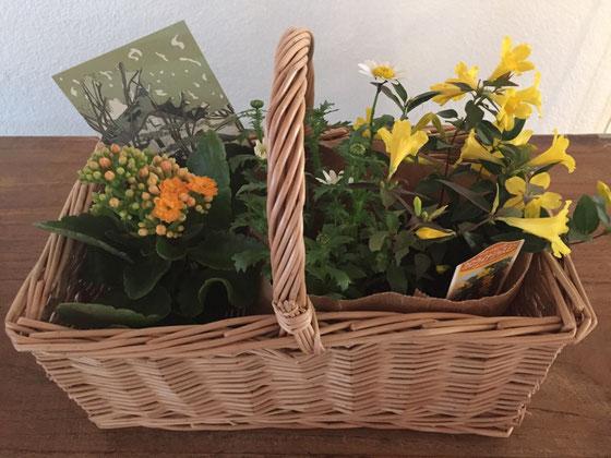 メッセージとバスケットに入った黄色のジャスミンとマーガレットと左端は何だったかな?をいただいた♪w 黄色のジャスミンを初めて見ました♪ 超嬉しい! この植物達を立派に成長させてまたここでUPできるよにします! 皆さんほんとありがとうございました♪ *前に頂き物の種類がかぶるということを書きましたけど、、、どうです!? この植物日曜日と火曜日にいただいたモノですけど凄くないですか?w なんか怖いわ!♪