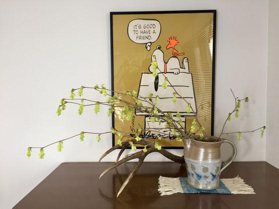 近くの産直市で買った枝物、、こいつの名前はトサミズキ?