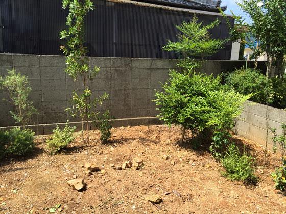 コレが現在のうちの庭www かなり残念な状態なんですよね~www でも3年~5年後にはお隣さんに追いつく予定なんでシクヨロ♪ *諸事情より2ヶ月くらい庭いじりしてませんけど、明日の午前中は、ガッツリと時間取れそうなんで楽しみです♪