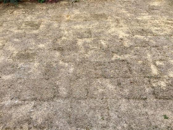 芝生もすっかり冬枯れしちゃって寂しい感じに、、、、春まで後2ヶ月、。