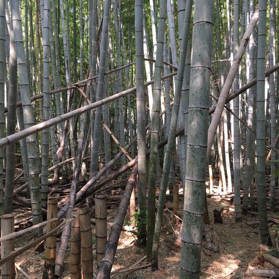 今まで登山で竹林の中を通ることってなかったけど、すげ~いい! 涼し気で癒される♪