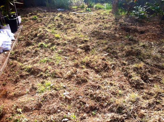 昨日も午前中は庭造り、、雑草も嫌いじゃないけど伸び過ぎるから芝にチェンジ!そのために雑草除去。 この量、土袋に20袋分! それでも足りなく後10袋は要るかな? おかげで筋肉痛です。。。