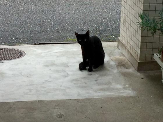 あの子猫ちゃんがもうここまで! シュッとしててカッコいい♡ *目つきで分かると思いますが全く慣れてくれまへん!(汗)