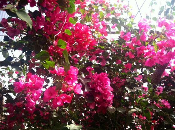 、、、それにしてもパトロールで寄った西島園芸団地だけど花の開花ラッシュで超ゴイスー♪ 見に行くだけでも価値あると思うんで行ってみては、♪