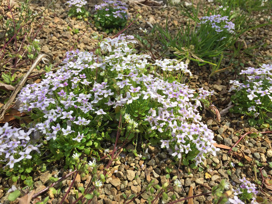 うちの庭もこんなのが雑草で生えてたらな~、、、途中奥へ奥へ行く僕に二人が飽きてしまい別行動、、、、