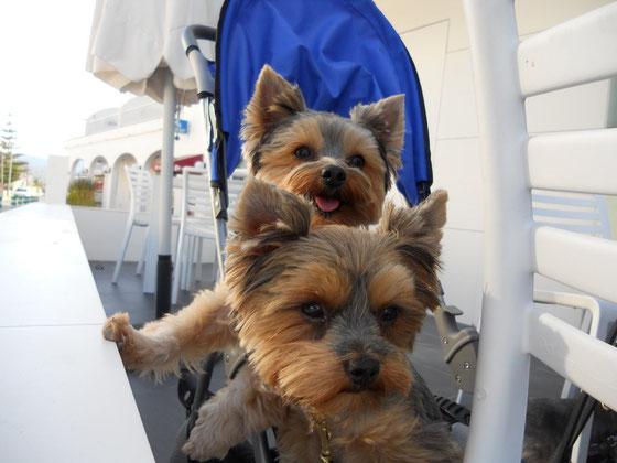 Amely und Enzo im Hundewagen in Spanien