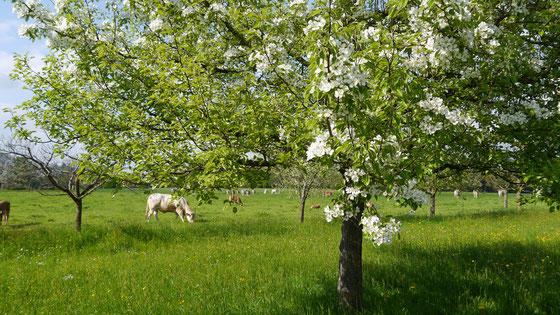 Bayerische Streuobstwiesen sind schützenswerte Biotope - Bild: BayernBrand