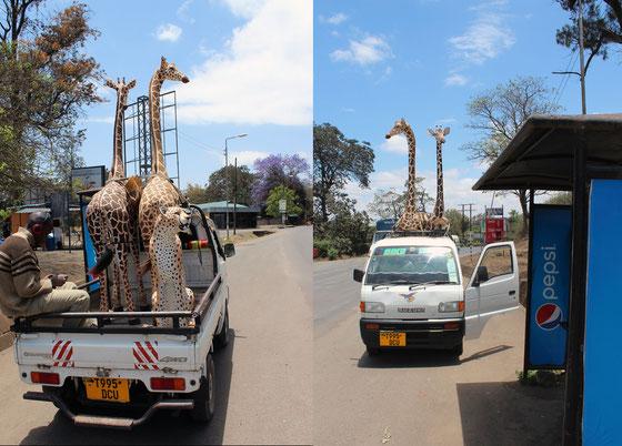 Moments de vie à Arusha