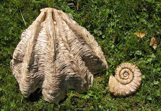 Riesenmuschel und Amonit