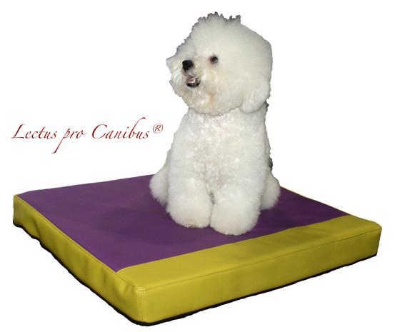 Gesunde orthopädische Hundeliege in hochwertigen Materialien aus dem medizinischen Pflegebereich für kleine und leichte Hunde wie Französische Bulldogge  oder Terrier