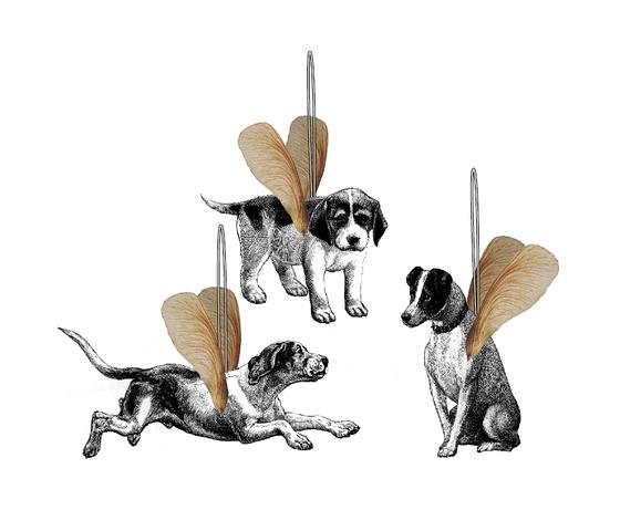 Fliegende Hunde