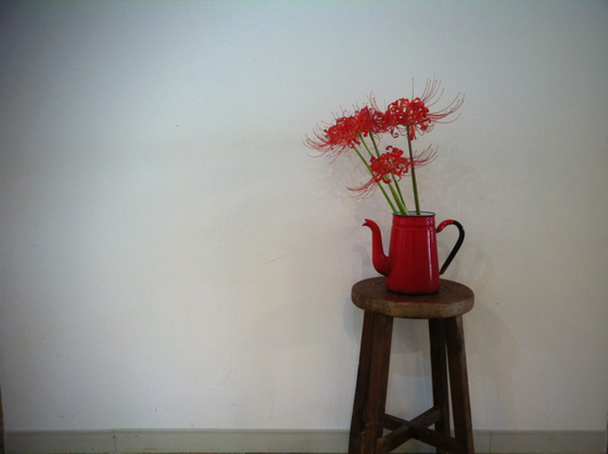 """先日ヒガンバナをネタにしました、、その時、白はアリって書きました、、裏を返せば""""赤""""はナシってことなんですが、その赤をいただいた! お客様のお庭に咲いているらしいんですが「綺麗でしょ?」って、、、てか活けたらすげ~いいんですけど! マジ超いい!www いただいたから言ってるんじゃなくマジで超気に入っちゃいました♡ ヒガンバナに対するネガティブなイメージが無くなったんですけど♪ 和田さんありがとうございました!マジで気に入ってますからWWW"""
