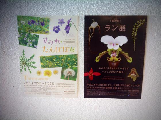[すみれ・たんぽぽ展]2/20~5/29  *  [ラン展]2/6~28日