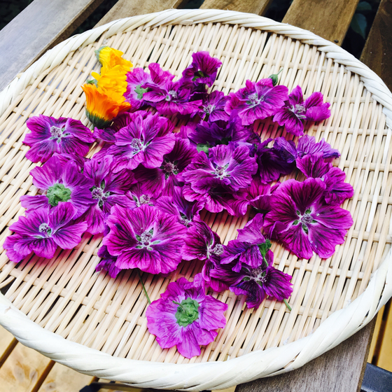 ブルーマロウの花