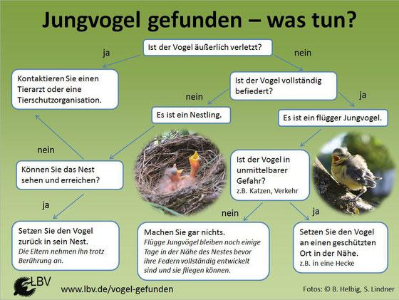 Praktische Grafik mit einzelnen Schritten beim Vogelfund © LBV