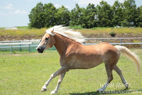 馬の幸せのために