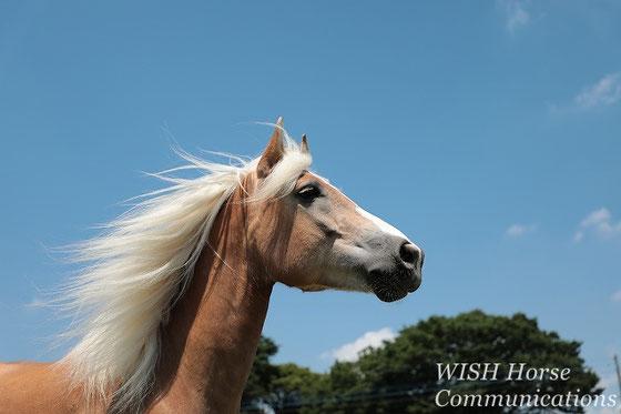かっこいい馬