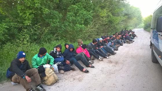 Die in der Nacht aufgegriffenen illegalen Migranten in Asotthalom (Ungarn)