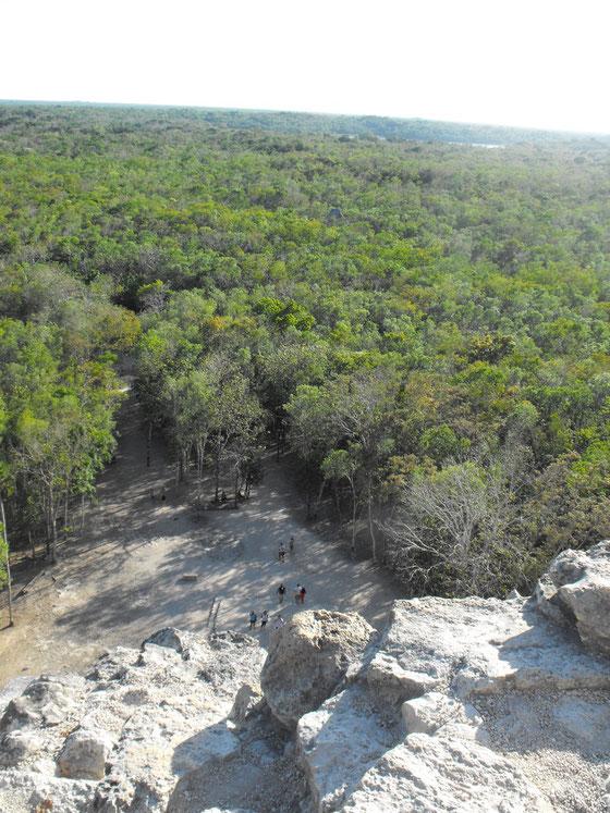 ピラミッドから見下ろすジャングル